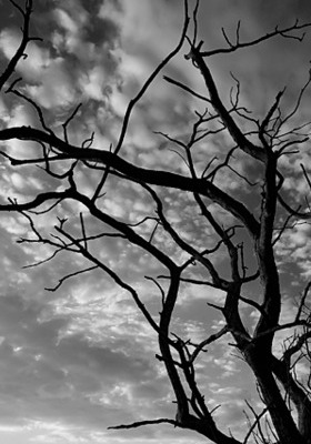 Branches IPhone Wallpaper Mobile Wallpaper