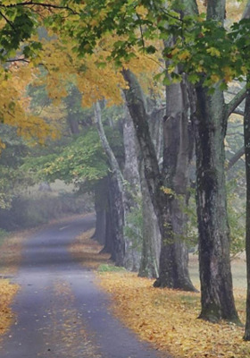 Nice Road And Trees Leafs IPhone Wallpaper Mobile Wallpaper