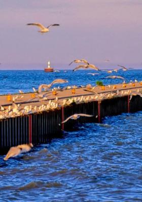 Flying Bird Blue Water Sea Mobile Wallpaper