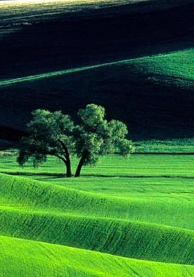 Green View Nature IPhone Wallpaper Mobile Wallpaper