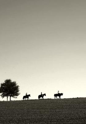 Mans In Horse  Mobile Wallpaper