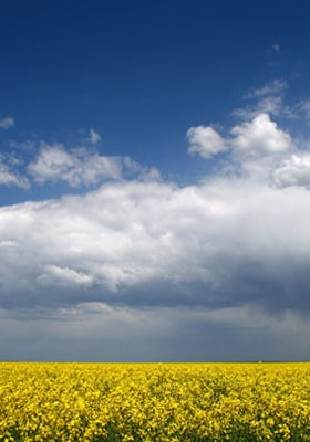 Clouds And Field Yellow Mobile Wallpaper