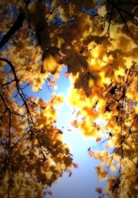 Golden Leaves Mobile Wallpaper
