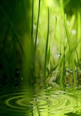Grass Ripples Mobile Wallpaper