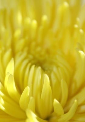 Macro Yellow Flower Mobile Wallpaper