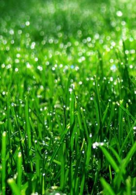 Morning Grass Mobile Wallpaper