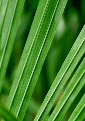 Palm Leaf Mobile Wallpaper