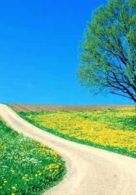 Spring Road Mobile Wallpaper