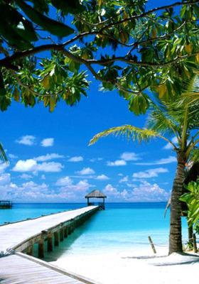 Tropical Island Beach Mobile Wallpaper