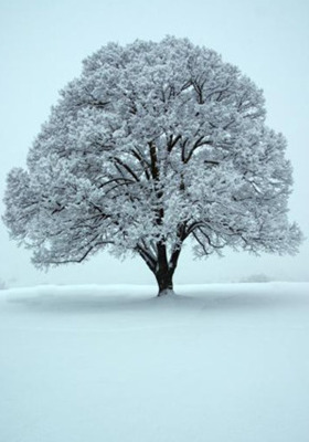 Winter Tree Mobile Wallpaper