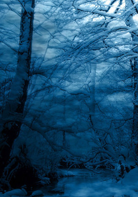 Winter Mobile Wallpaper