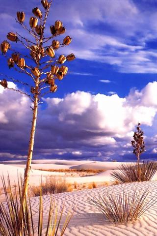 Desert Vegetation Mobile Wallpaper
