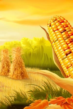 Corn Fields Mobile Wallpaper
