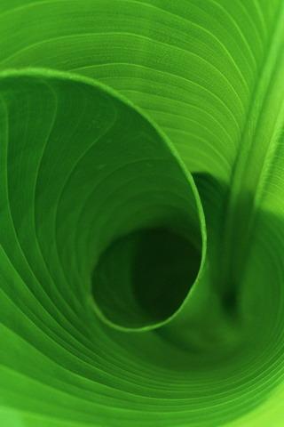 Curled Leaf Mobile Wallpaper