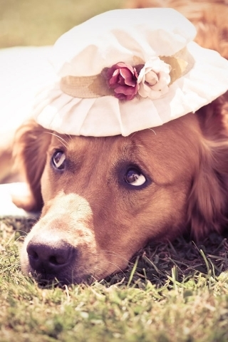 Lady Dog Mobile Wallpaper