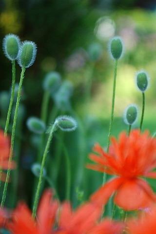 Growing Plants Mobile Wallpaper