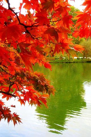 Oange Autumn IPhone Wallpaper Mobile Wallpaper