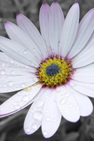 Purple Drops Flower Mobile Wallpaper