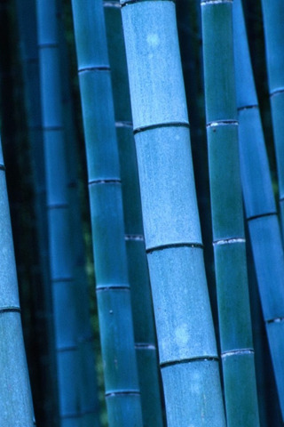 Blue Bamboo Nature IPhone Wallpaper Mobile Wallpaper