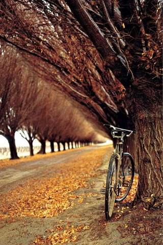 Bicycle On Autumn IPhone Hd Wallpaper Mobile Wallpaper