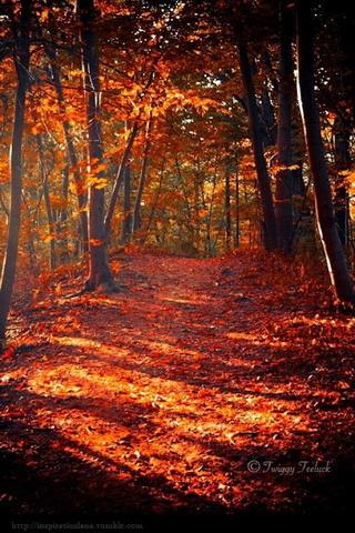 Fall Orange Autumn IPhone Wallpaper Mobile Wallpaper
