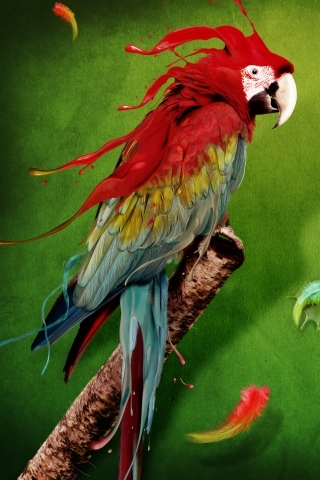 Colorful Parrot IPhone Wallpaper Mobile Wallpaper
