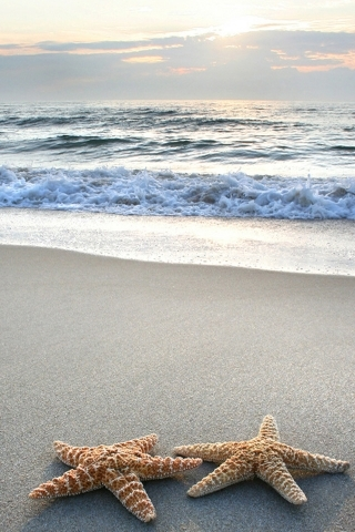 Sea Beach Starfish IPhone Wallpaper Mobile Wallpaper
