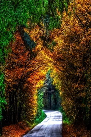 Cover Autumn Trees Way IPhone Wallpaper  Mobile Wallpaper