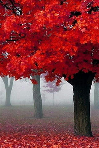 Red Autumn Fog In France IPhone Wallpaper Mobile Wallpaper
