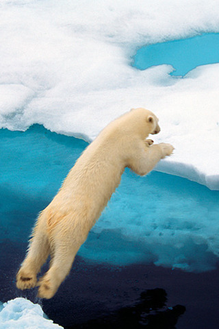 Polar Leap IPhone Wallpaper Mobile Wallpaper