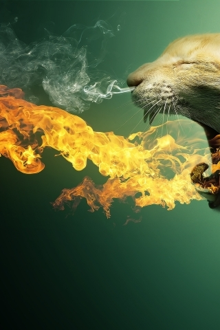 Cat In Fire IPhone Wallpaper Mobile Wallpaper