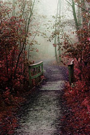 Autumn Mist Path For IPhone Wallpaper Mobile Wallpaper
