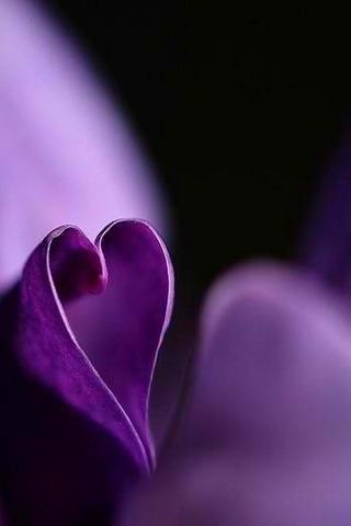 Purple Heart  For IPhone Wallpaper Mobile Wallpaper