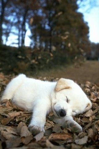 Sleepy Puppy In Nature IPhone Wallpaper Mobile Wallpaper