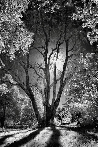 Dark Night Trees IPhone Wallpaper, Mobile Wallpaper