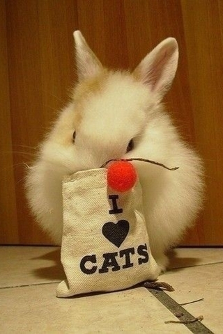 I Love Cat Hare IPhone Wallpaper Mobile Wallpaper