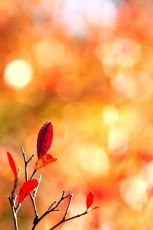 Red Leaves & Bokeh IPhone Wallpaper Mobile Wallpaper