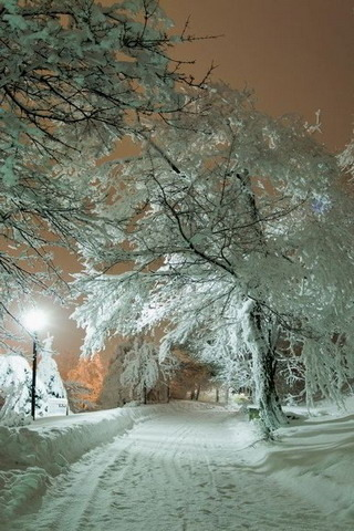 Download Winter Night Nature In Russia Iphone Wallpaper Mobile