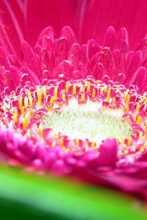 Lovely Purple Flower IPhone Wallpaper Mobile Wallpaper