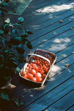 Basket Of Tomatoes IPhone Wallpaper Mobile Wallpaper