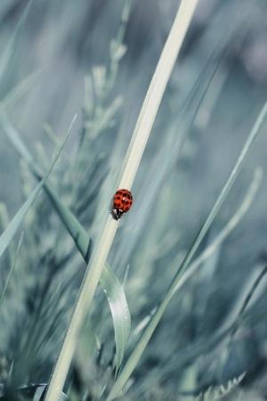 Ladybug IPhone Wallpaper Mobile Wallpaper