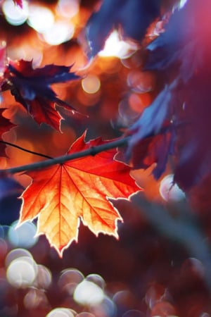 Autumn Leaves Nature IPhone Wallpaper Mobile Wallpaper