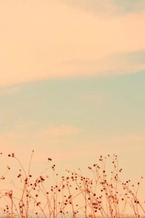 Autumn Berries IPhone Wallpaper Mobile Wallpaper