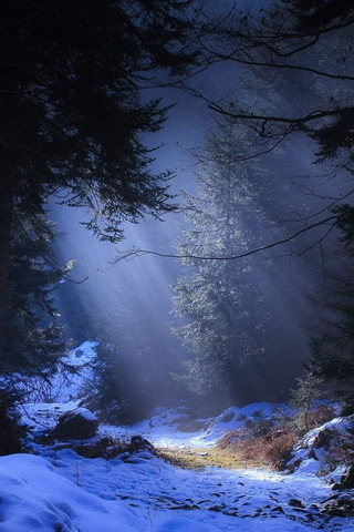 Download Amazing Winter Night Light Iphone Wallpaper Mobile