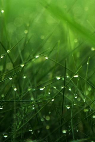 Dew Grass Drops IPhone Wallpaper Mobile Wallpaper
