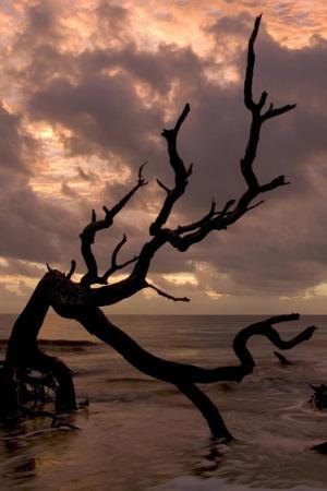 Tree Shore & Sea IPhone Wallpaper Mobile Wallpaper