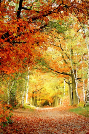 Autumn Way & Leaves IPhone Wallpaper Mobile Wallpaper