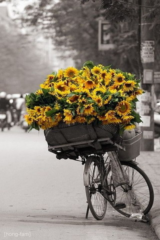 Sunflowers On Bicycle IPhone Wallpaper Mobile Wallpaper
