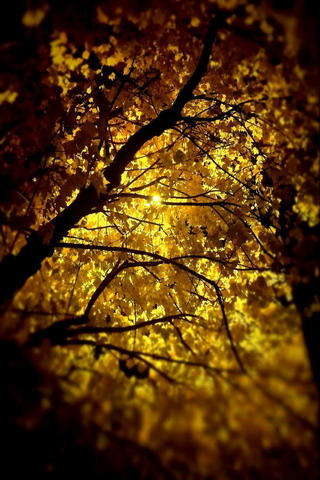 Night Light Nature IPhone Wallpaper Mobile Wallpaper
