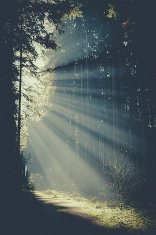 Amazing Forest Nature Lights IPhone Wallpaper Mobile Wallpaper